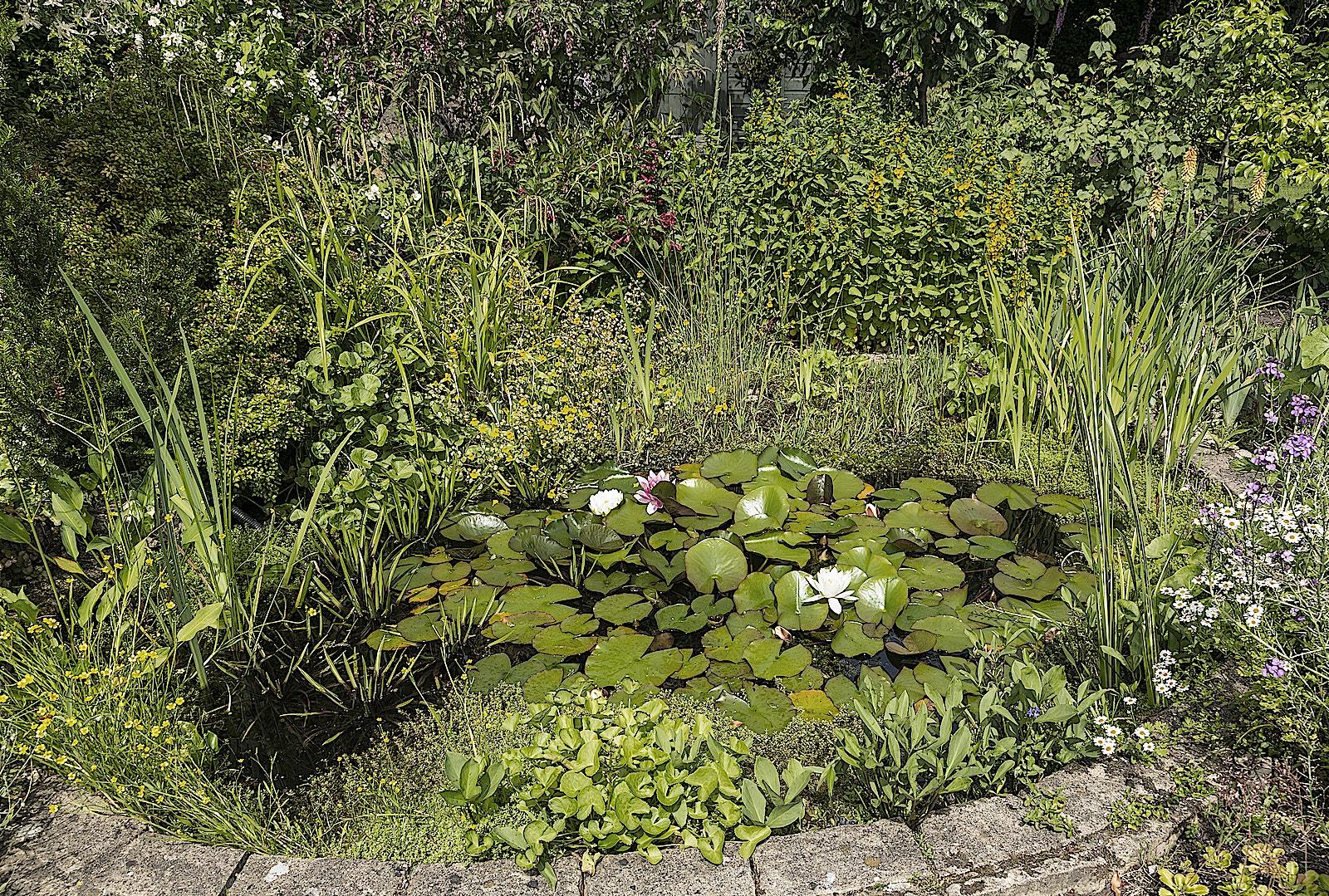 12 Pond SS