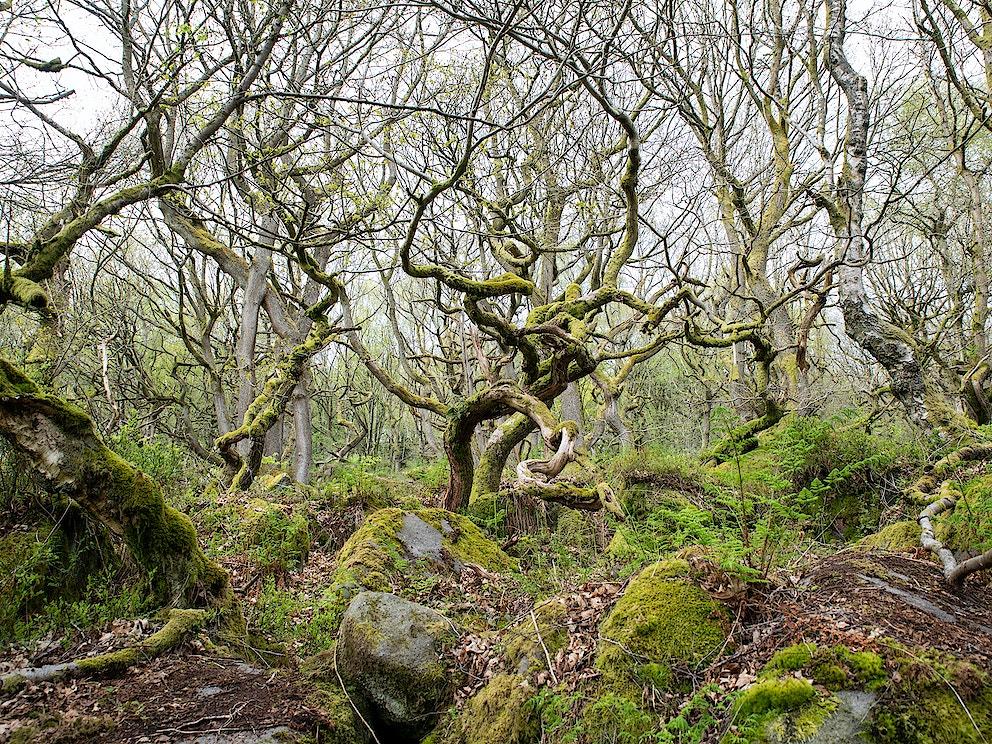 2021 05 2627 Sam Rose RB Peak District Padley Gorge s RGB 300dpi 2000px long 3805