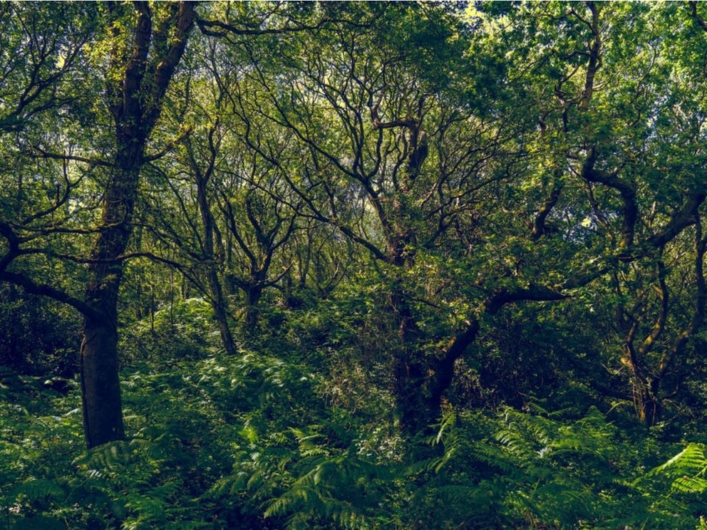 Ancient woodland in Bournmouth by Nick Fewings