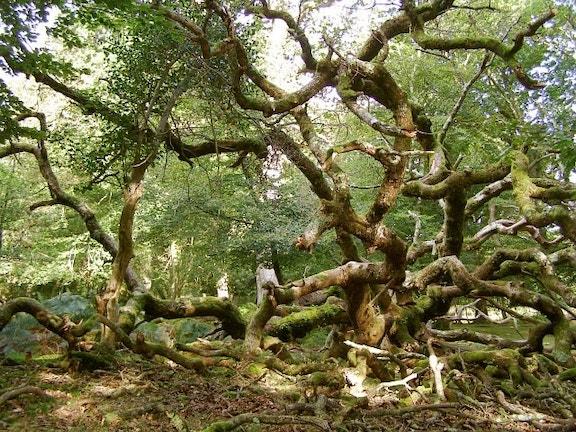 Denny Wood fallen tree