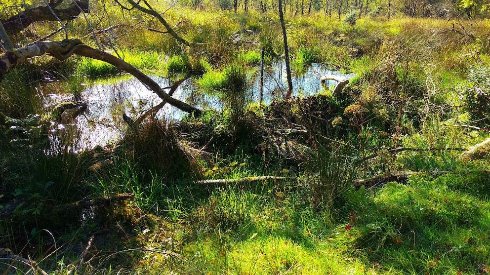 Devon Beaver Enclosure