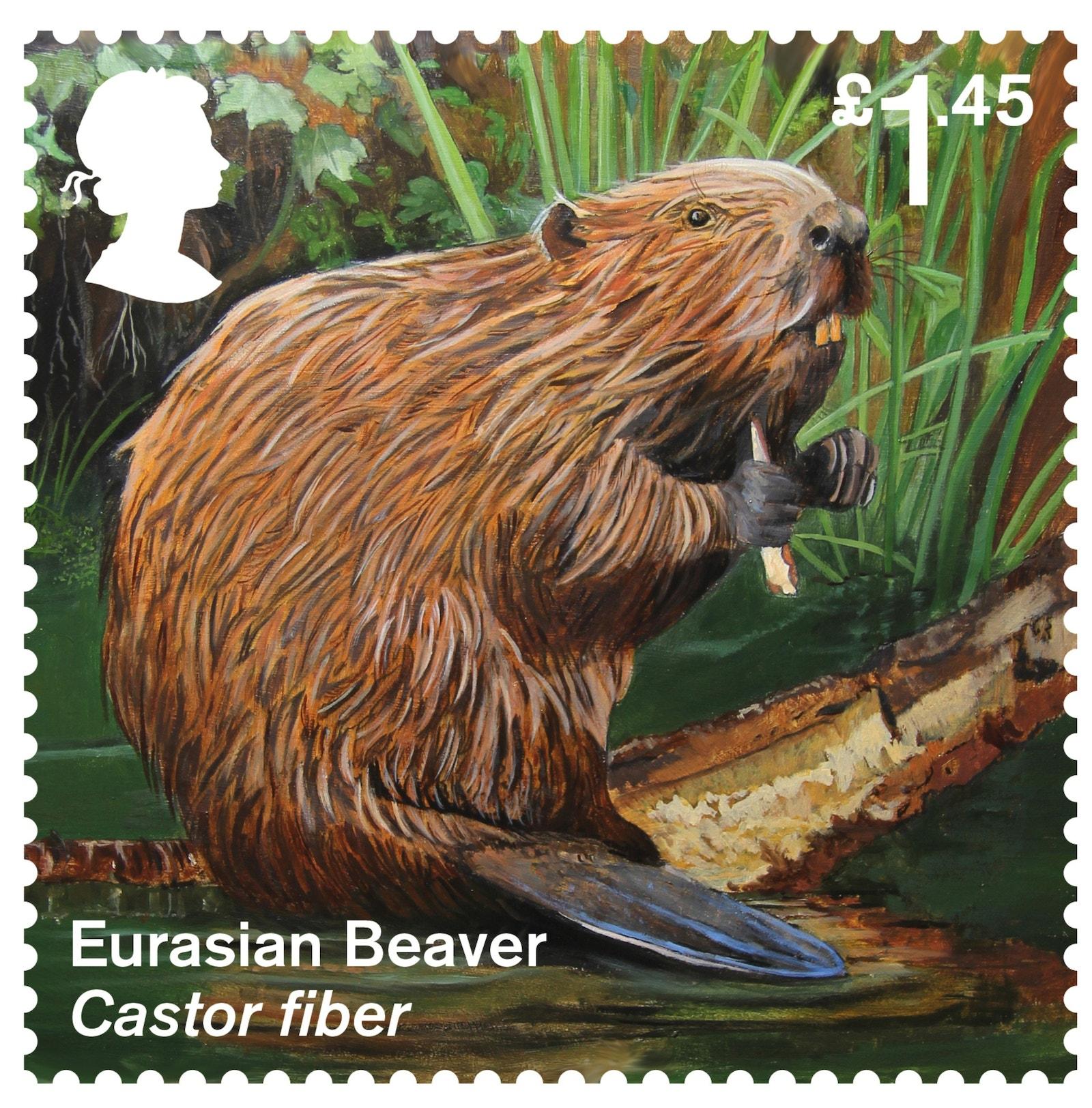 Eurasian Beaver Stamp