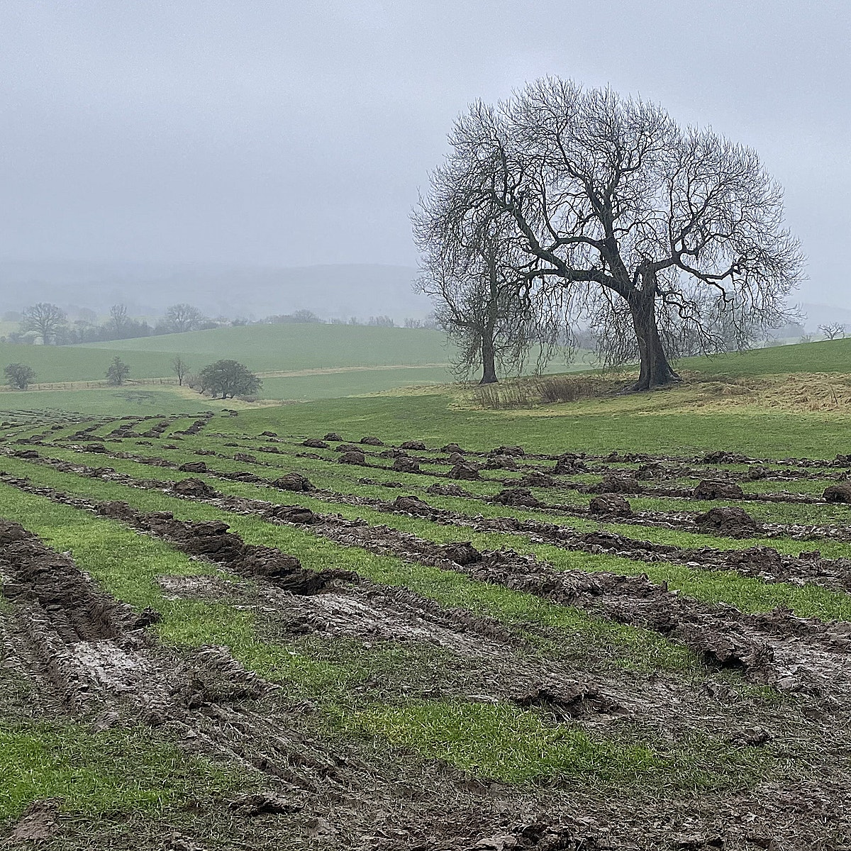 Ground preparation underway for large scale tree planting