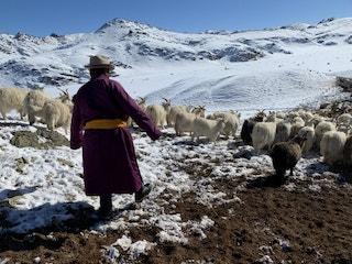 Herder Mongolia 500x375