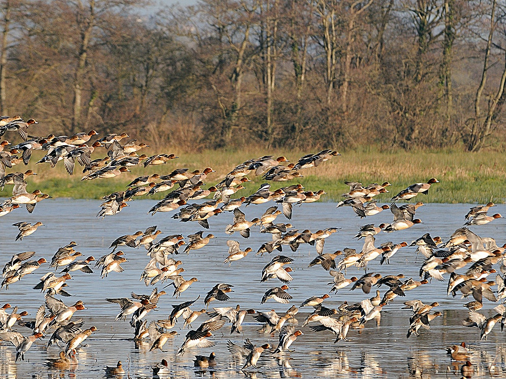 Ins outs of wetlands