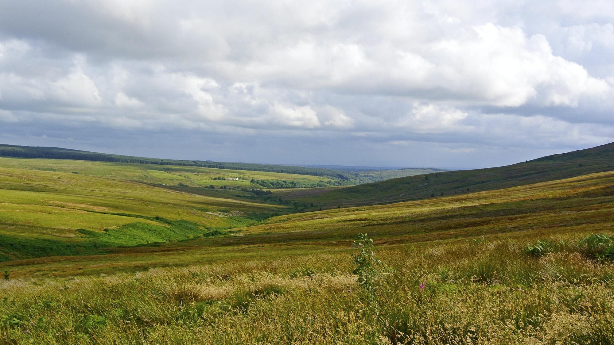 Langholm Moor copyright Tom Hutton