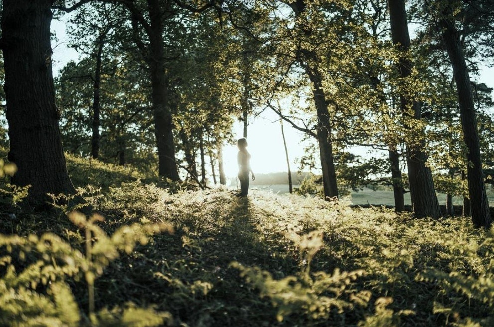 Leicester Woodland by Nirmal Rajendharkumar via Unsplash