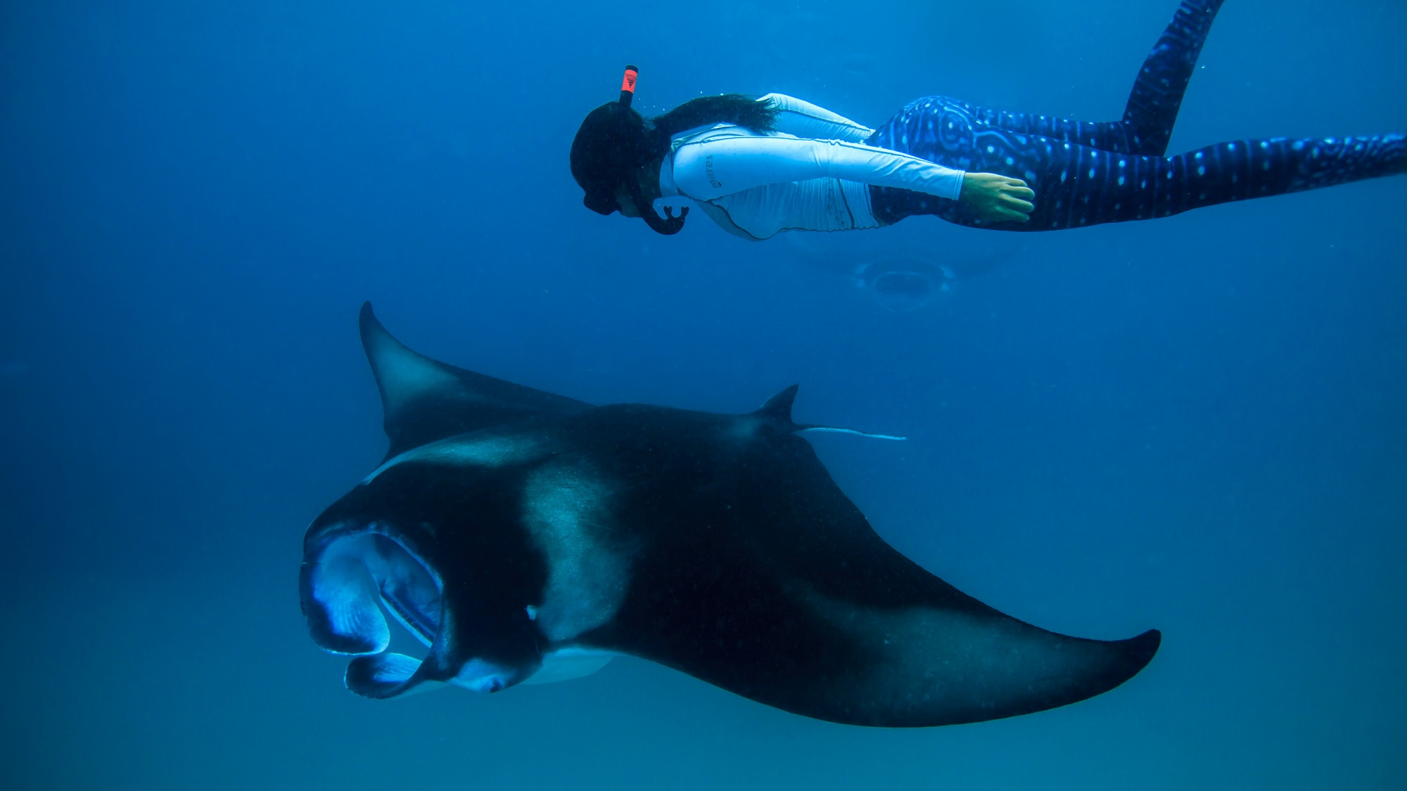 Malaika diving