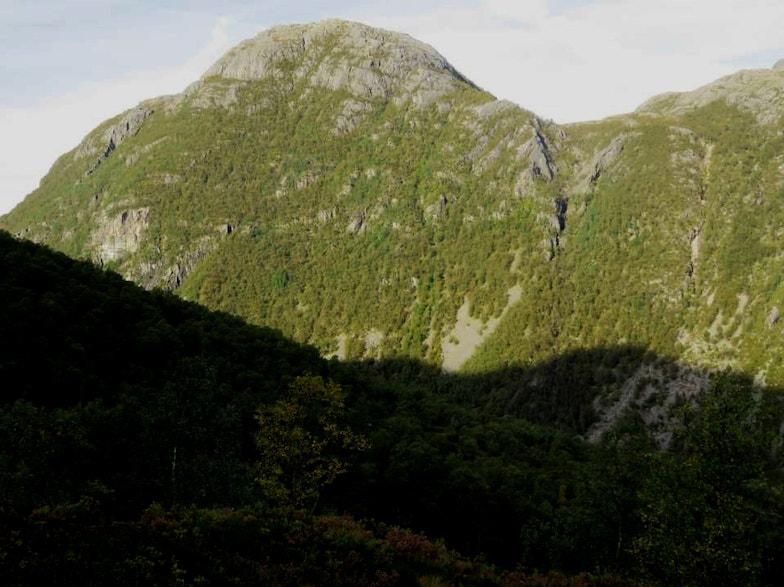 Norway birch aspen openscree