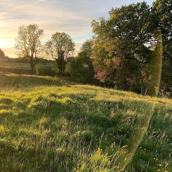 Picture of Sunart Fields