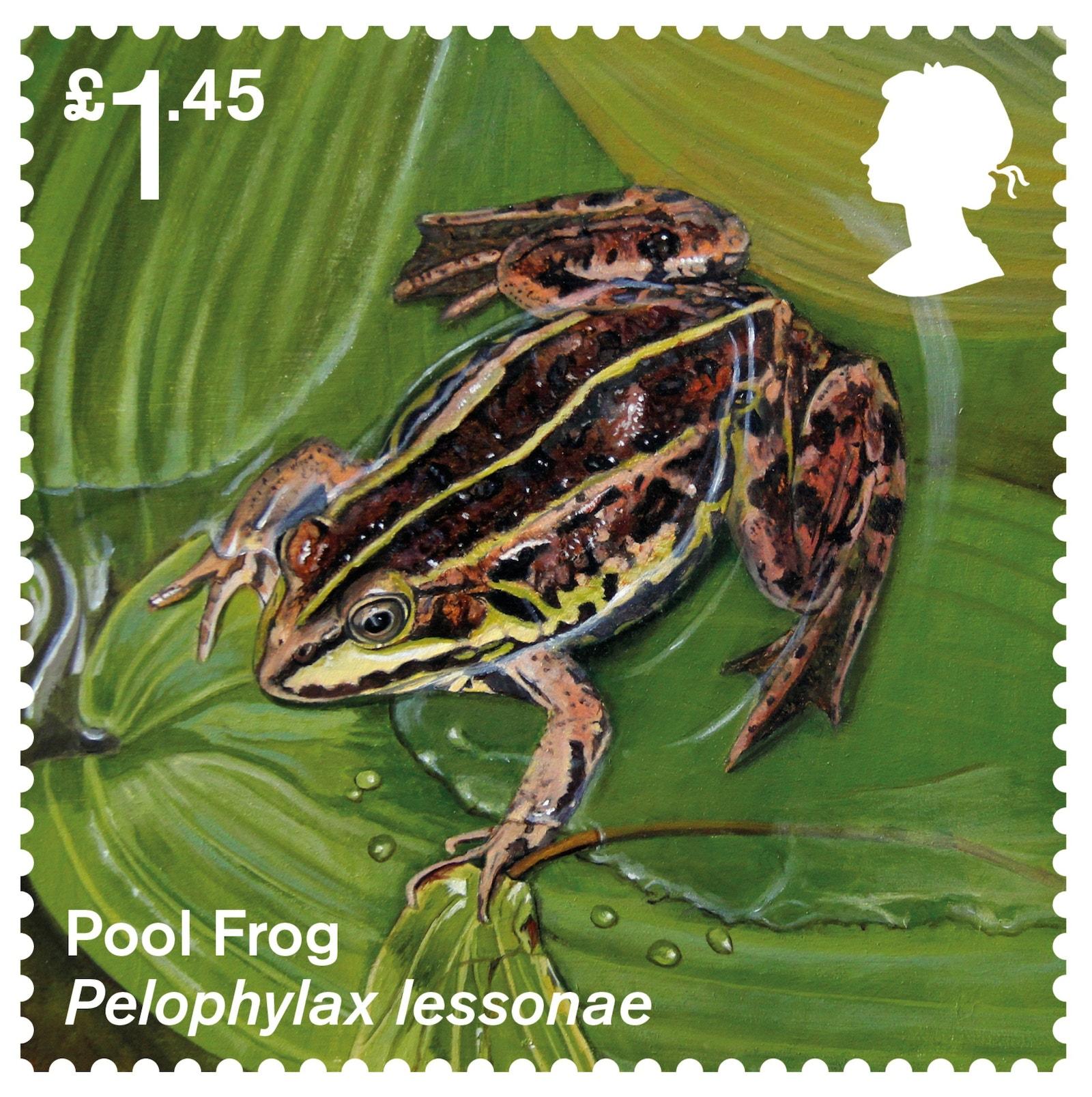 Pool Frog Stamp
