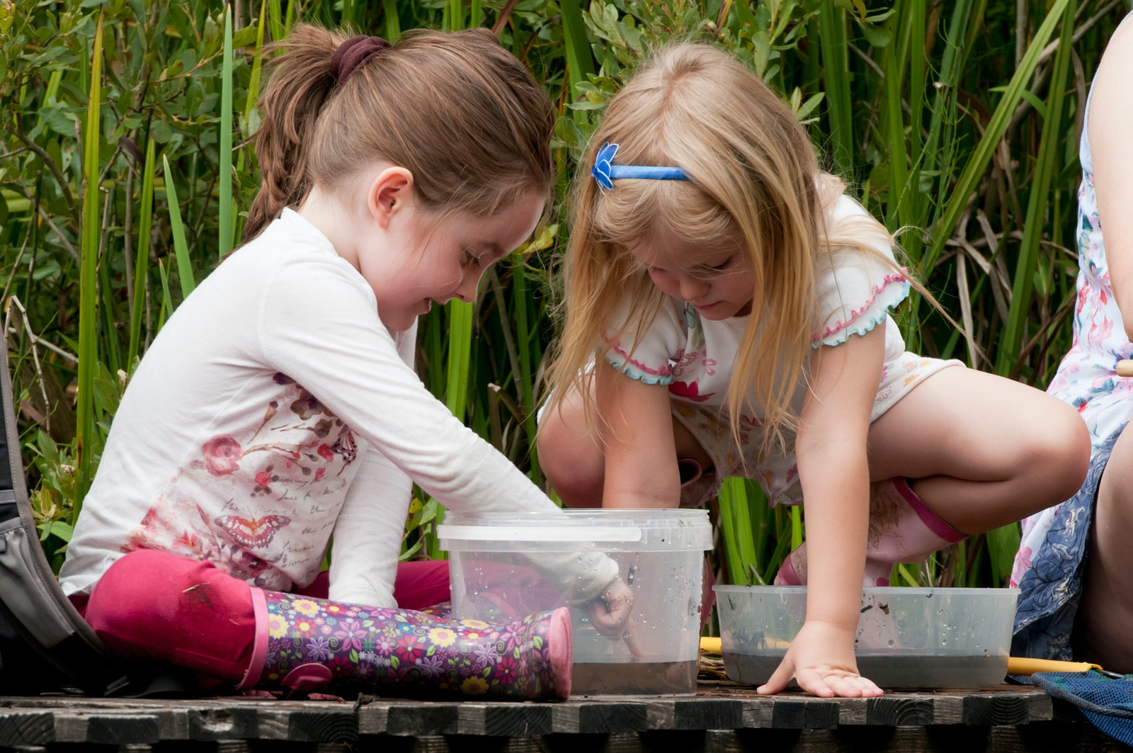 RHO Pond dipping 5918opt