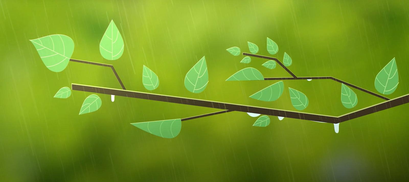 Rewild Nation leaf