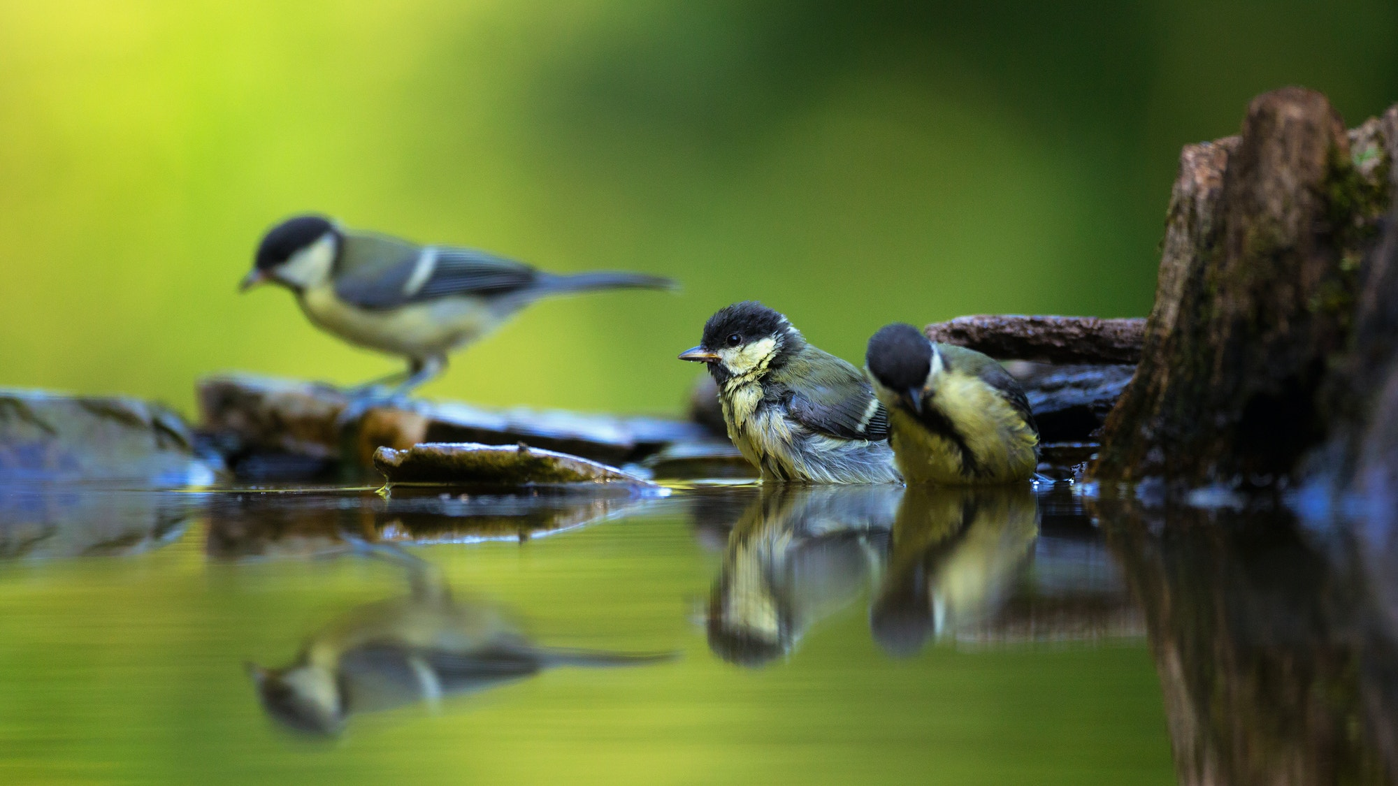 Rewilding smaller scale