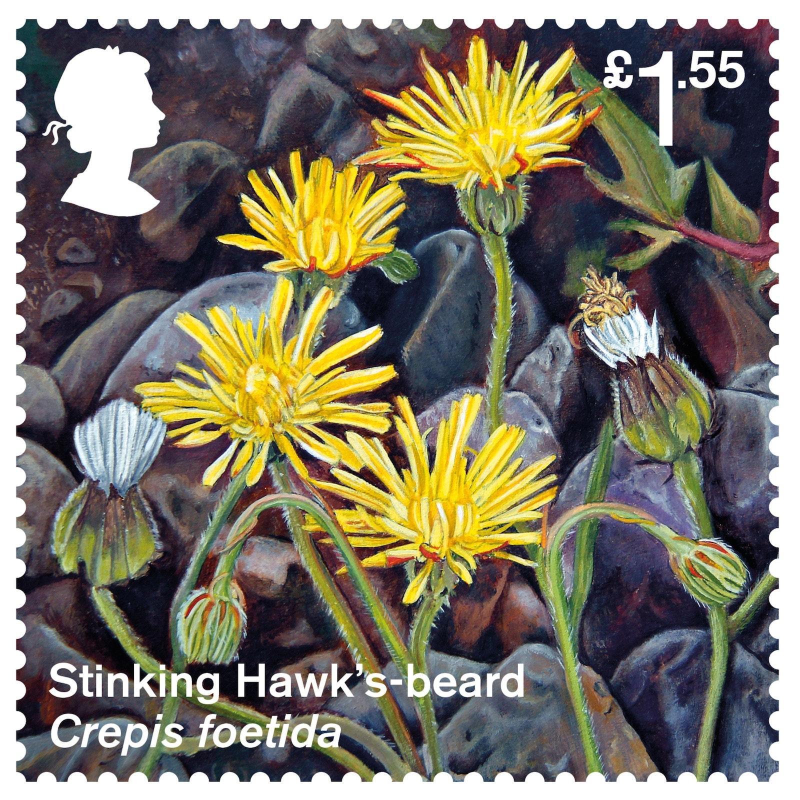Stinking Hawks Beard Stamp