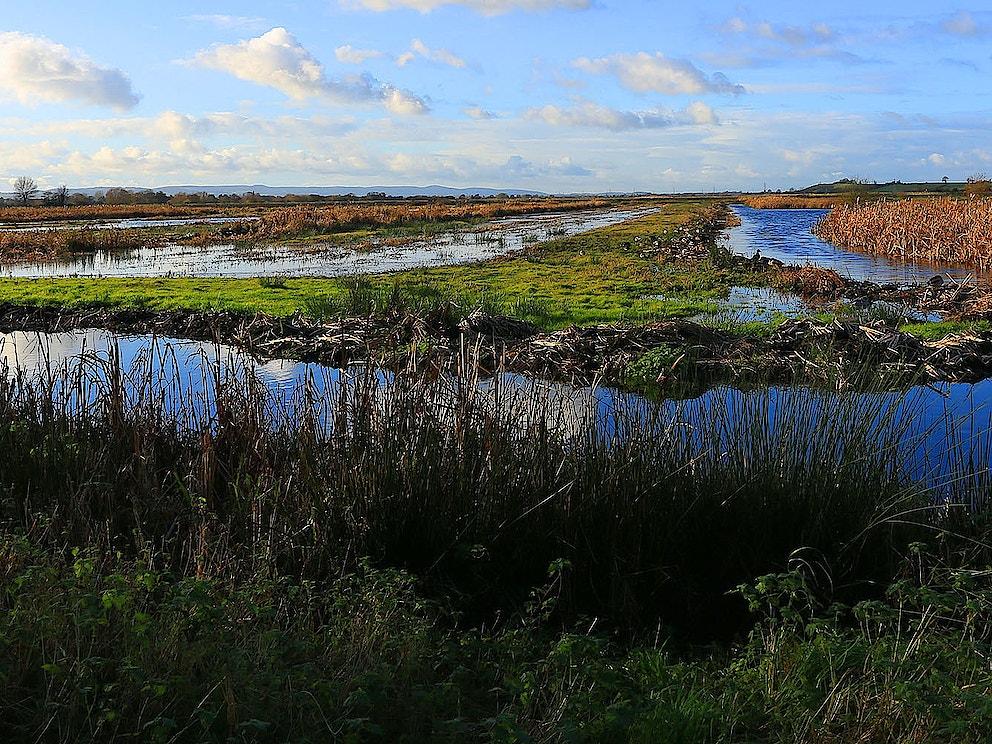 The wetlands BG