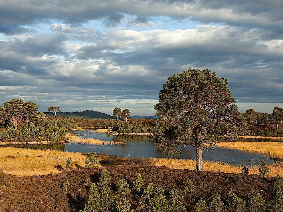 Treesn Woodlands Mark Hamblin SBP