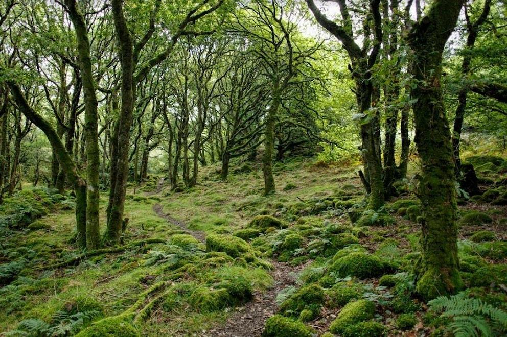 Ty Canol Wales by Mark Pel via Unsplash