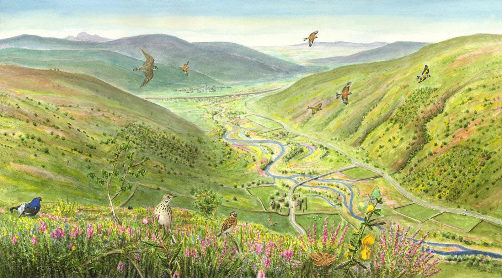 Uplands transition