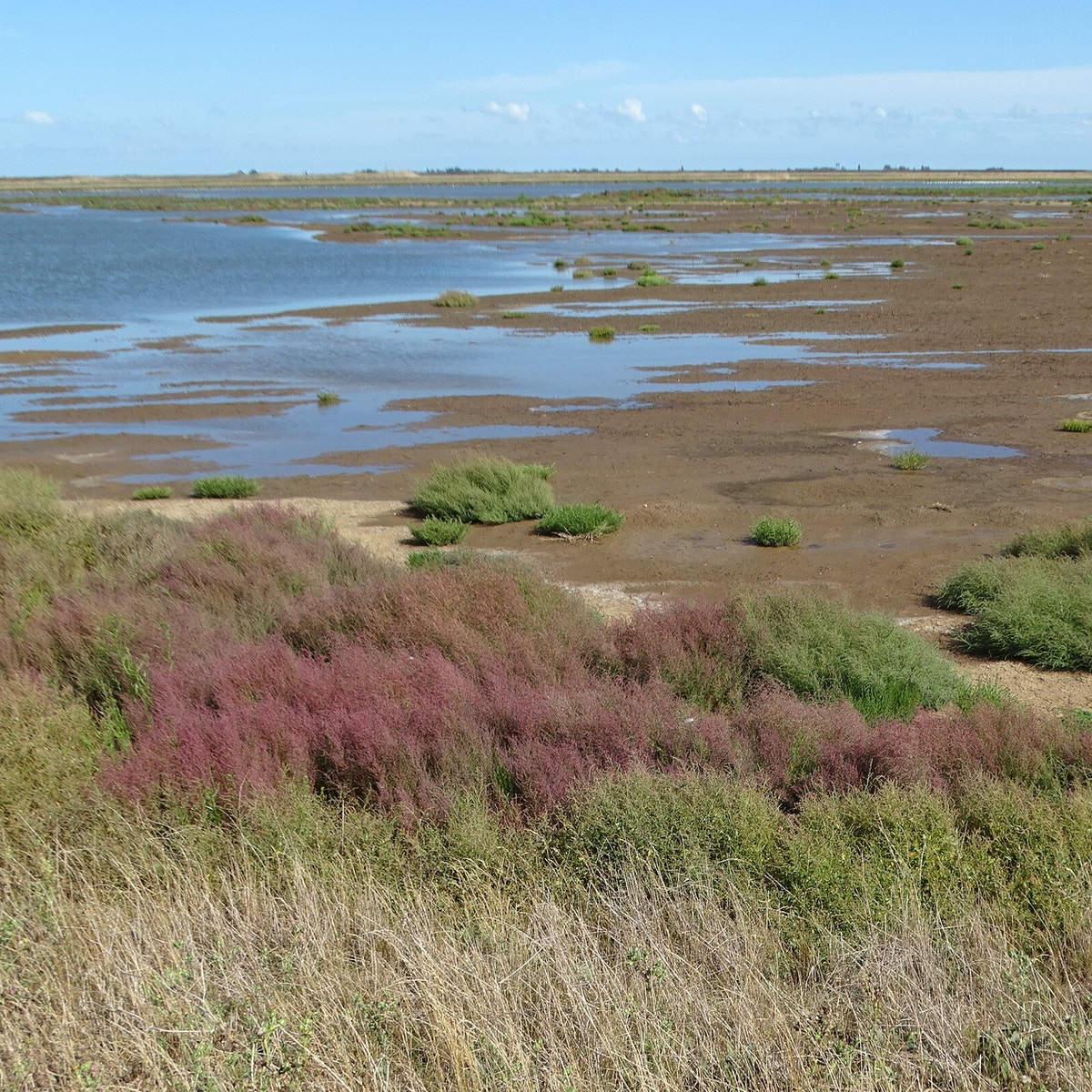 Wallasea flooding up Stokes Lagoon August 2020