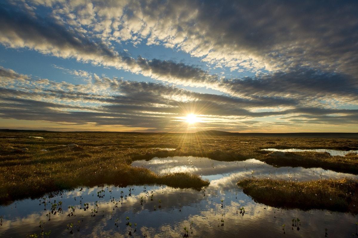 Wild Media Peatland