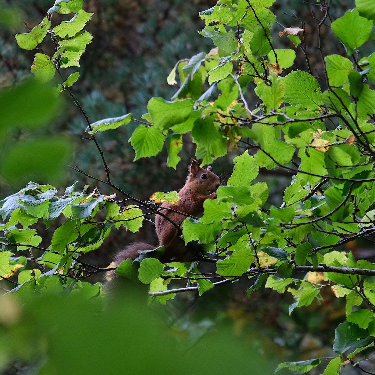 Wildside squirrel 2