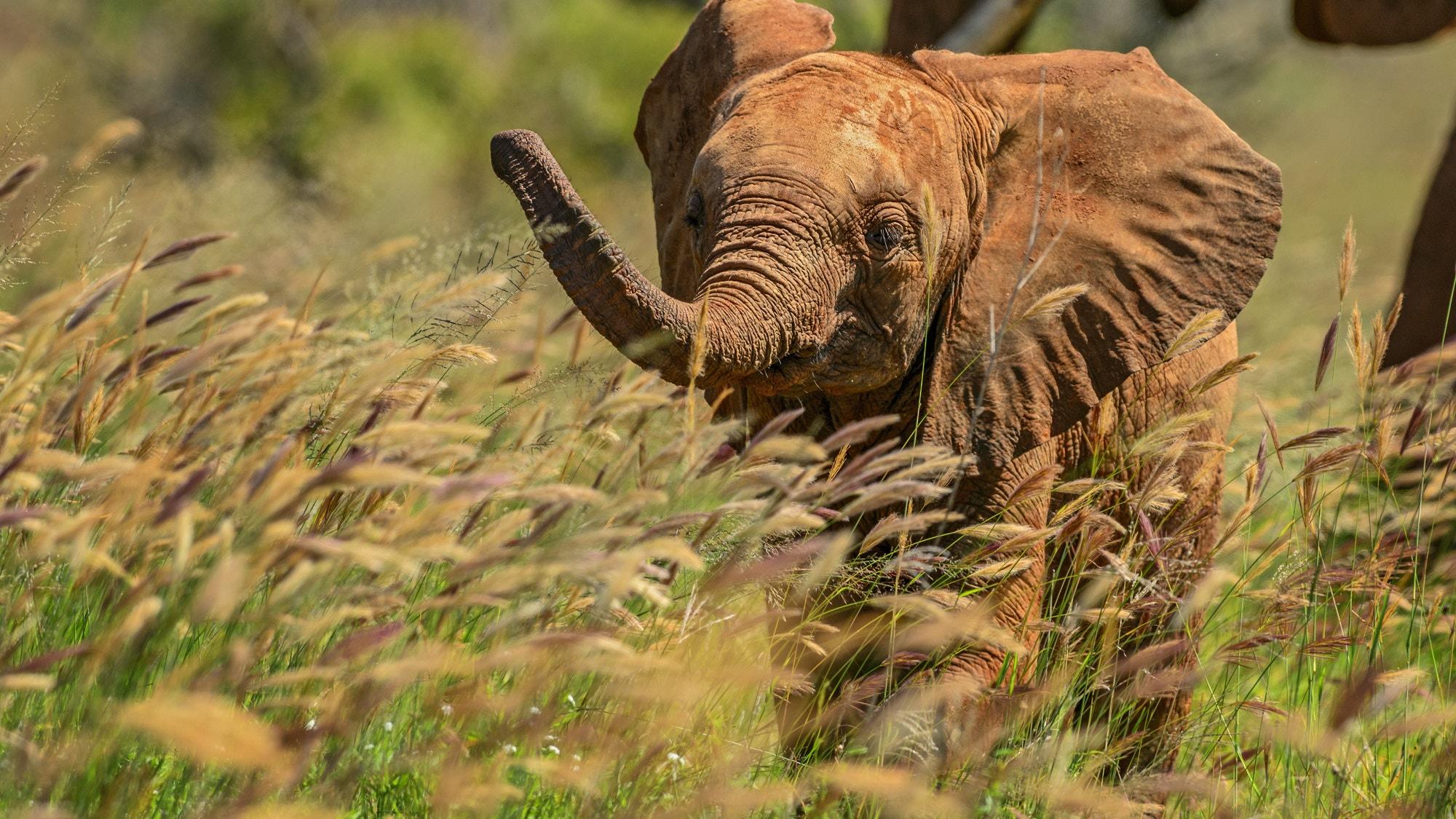 Baby elephant SS 420509194