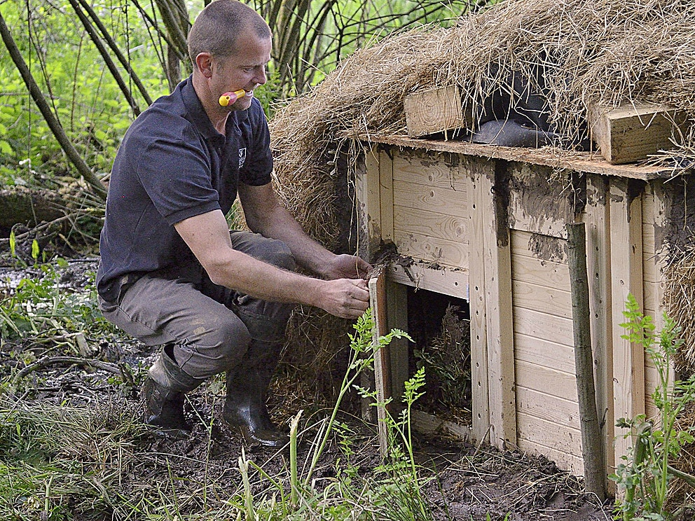 Beaver kennel