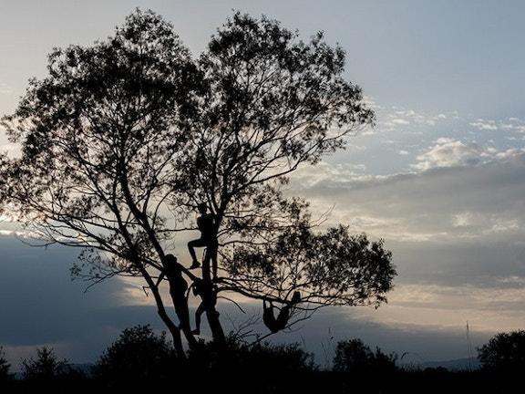 Blog people in tree 9c826e7a408806c4ea6b40b0d37e4d42