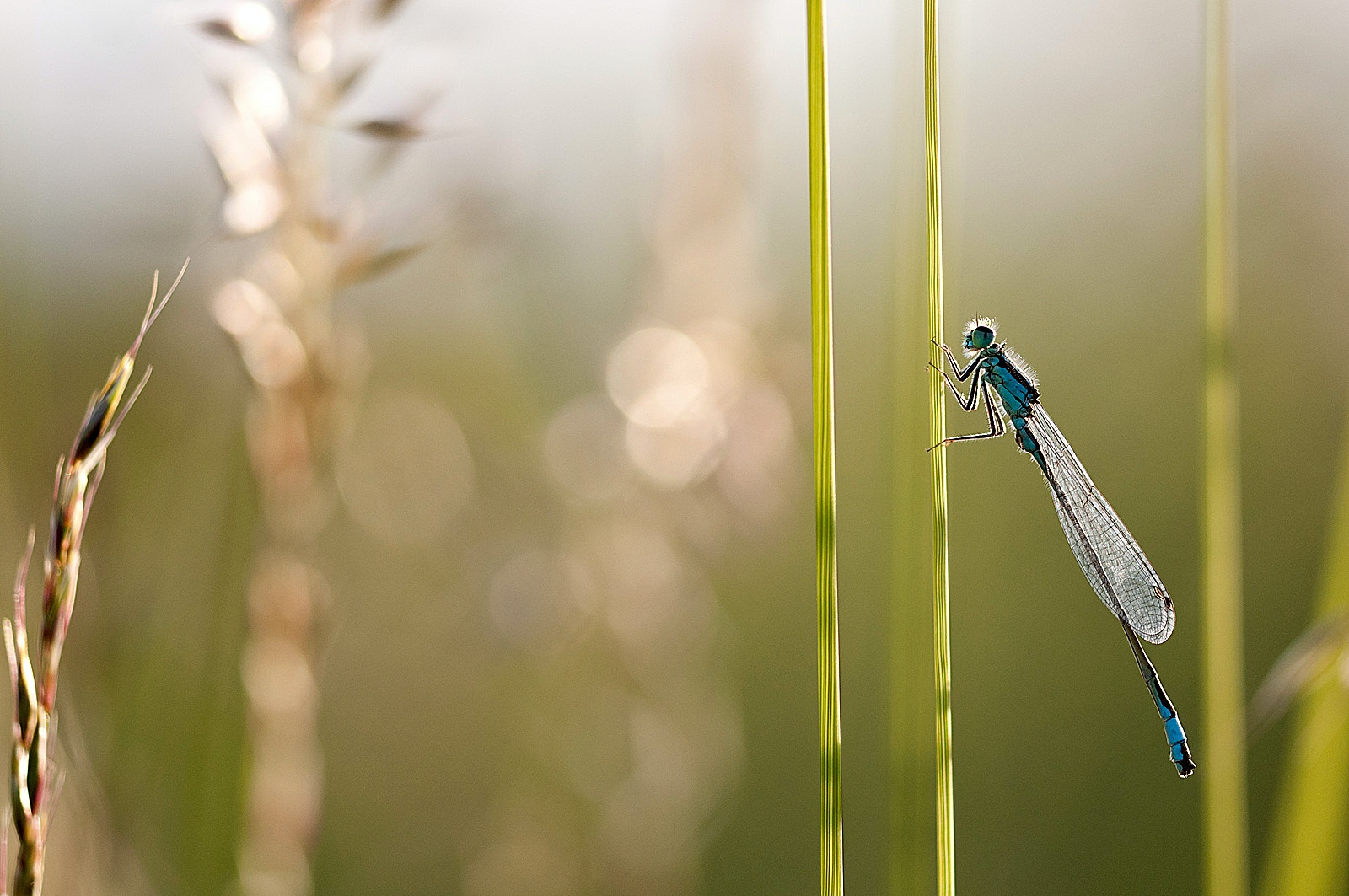 Damselfly wetland SBP Ross Hoddinott