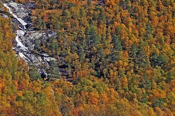 Pine birch Bykleheiane680