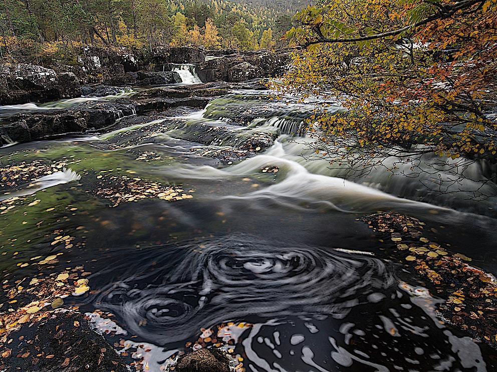 Rewilding water