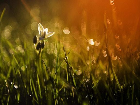 Sun on flower 9c826e7a408806c4ea6b40b0d37e4d42
