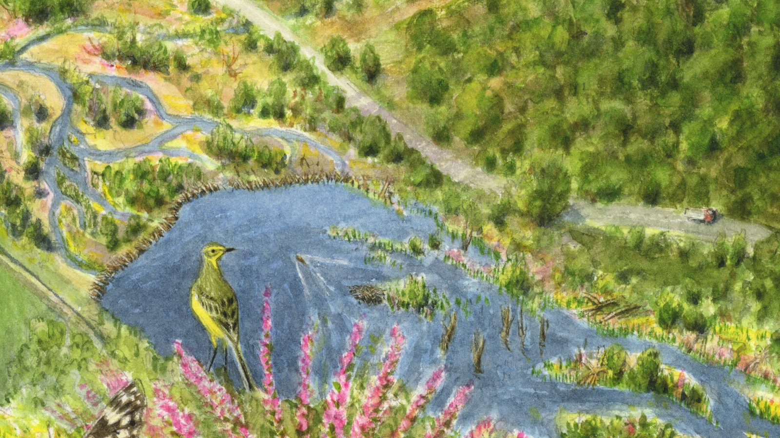 Uplands future wetlands