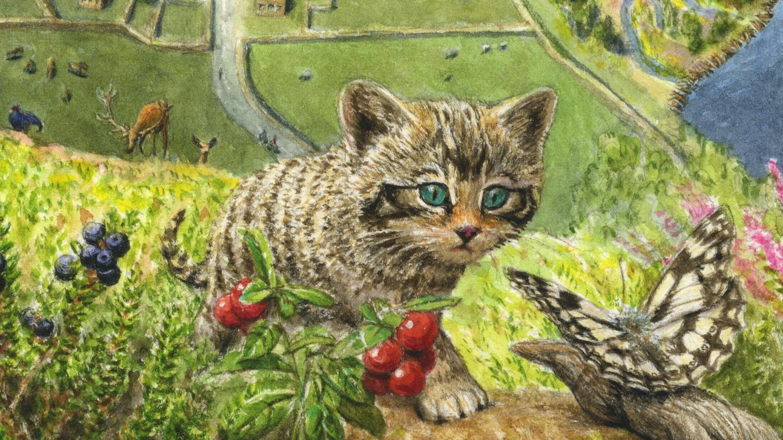 Uplands future wildcat