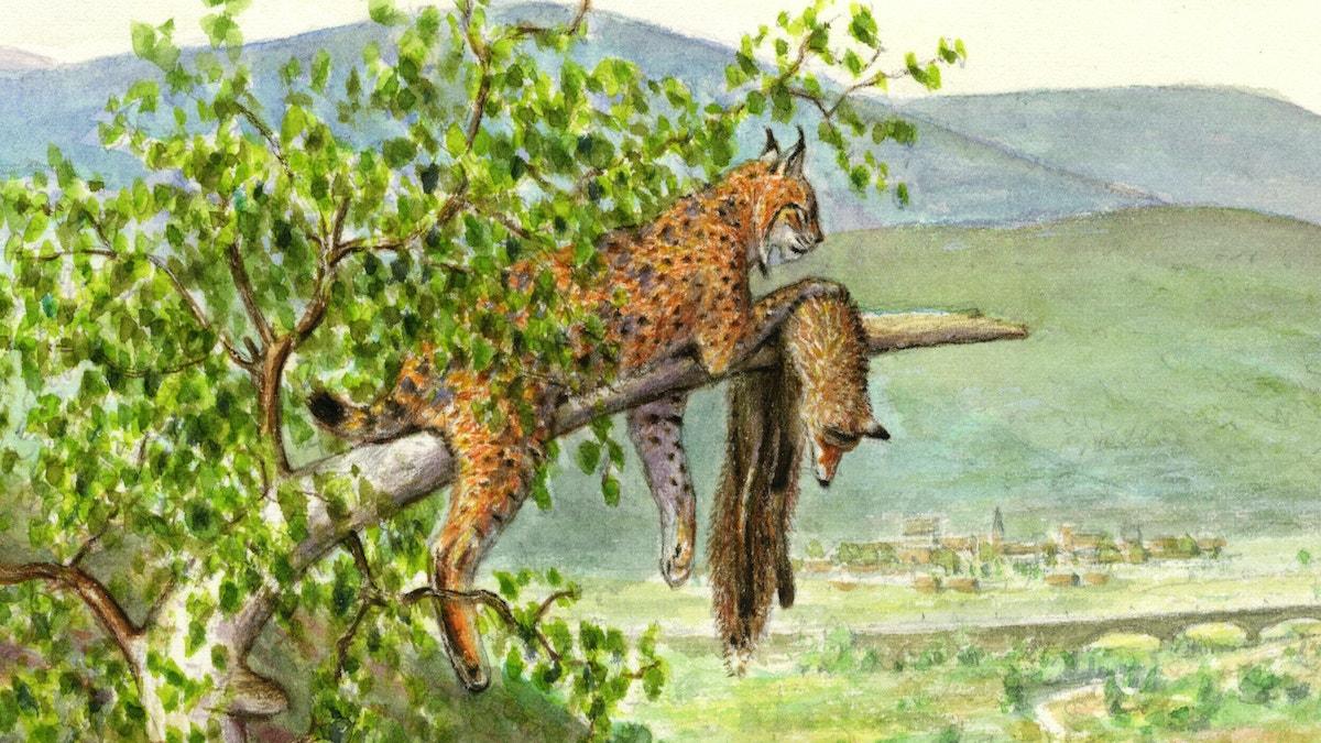 Uplands lynx