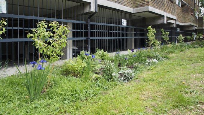 Lost Effra rain gardens looking lovely df9655313350af2b58792add1239b426